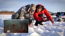 Мотособака, эхолот иэлектронные снасти: полезная техника для зимней рыбалки.НТВ.Ru: новости, видео, программы телеканала НТВ
