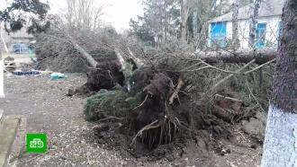 В Ставрополе ввели режим ЧС из-за мощного ветра