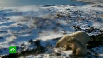На архипелаге Новая Земля сняли режим ЧС, введенный <nobr>из-за</nobr> медведей