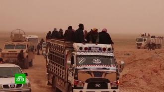 Российские и&nbsp;сирийские военные открыли коридоры для выхода беженцев из лагеря <nobr>&laquo;Эр-Рукбан&raquo;</nobr>