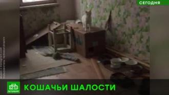 В Петербурге запертые в квартире кошки затопили соседей