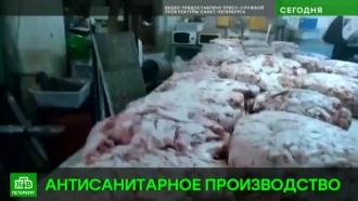 Питерский мясокомбинат оказался богат на крыс и пенопласт