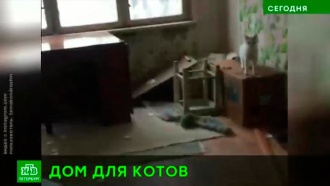 Затопивших соседей кошек из Петербурга перевезли в приют