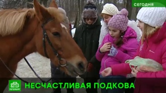 В Петербурге пытаются закрыть конюшню, где много лет практикуют иппотерапию