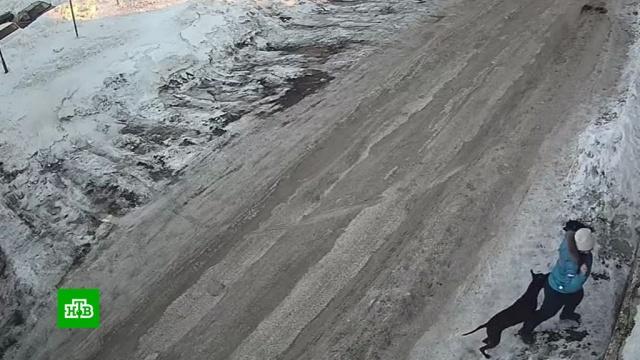 На Камчатке бойцовский пес напал на беременную женщину.Камчатка, нападения, собаки.НТВ.Ru: новости, видео, программы телеканала НТВ