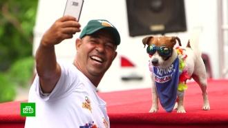 Наряженные клоунами и супергероями собаки прошлись по улицам Рио-де-Жанейро