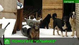 Собакам петербургского приюта «Ильинка» грозит голод