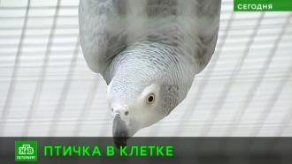В зимнем птичнике Петергофа сделали евроремонт