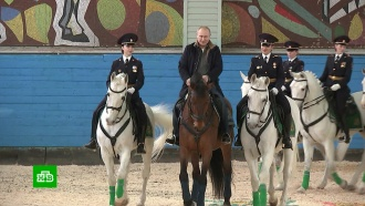 Путин прокатился на гнедом коне