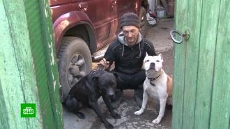 Заводчики собак призывают МВД пересмотреть список опасных пород