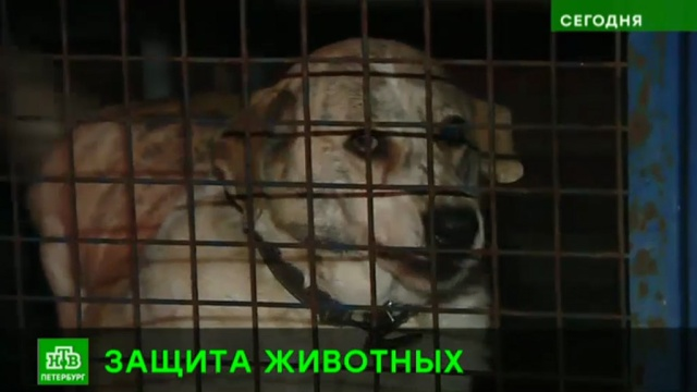 Петербургские депутаты поручат чиновникам заботиться о бездомных кошках и собаках.Законодательное собрание Санкт-Петербурга, Санкт-Петербург, животные, законодательство.НТВ.Ru: новости, видео, программы телеканала НТВ