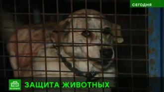 Петербургские депутаты поручат чиновникам заботиться о бездомных кошках и собаках