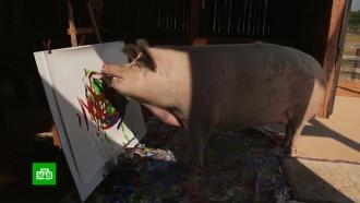 Коллекционеры выстроились в&nbsp;очередь за картинами <nobr>свиньи-художницы</nobr> Пигкассо