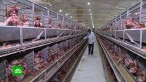 Пищевая промышленность Чечни выходит на новый уровень