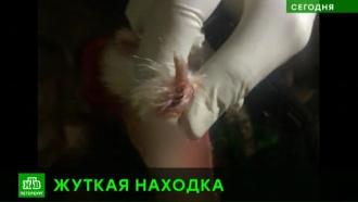 Питерские живодеры подбросили во двор пакет с убитыми кошками