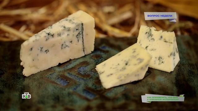 Неправильная плесень: признаки испортившегося сыра.НТВ.Ru: новости, видео, программы телеканала НТВ