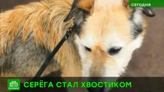 Спасенного от смерти на рельсах пса забрали от жестокого хозяина