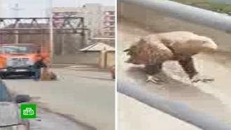 В Астрахани на дороге отловили редкую птицу