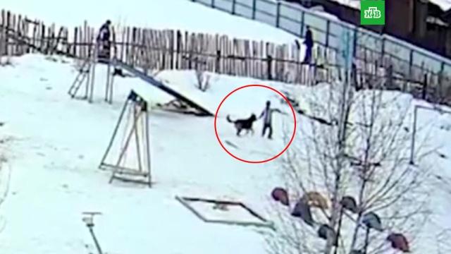 Бездомная собака напала на ребенка в Свердловской области.Свердловская область, животные, собаки, нападения.НТВ.Ru: новости, видео, программы телеканала НТВ