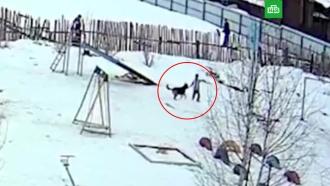 Бездомная собака напала на ребенка в Свердловской области