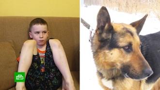 ВСвердловской области поймали напавшую на ребенка собаку
