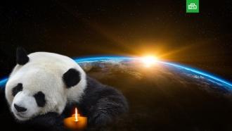 «Час Земли»: 60минут добровольного блэкаута