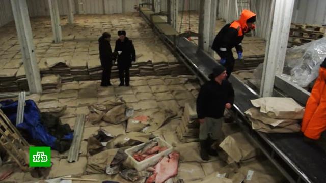 Два иностранных судна задержаны за ловлю креветок и краба в экономической зоне России.граница, корабли и суда, охота и рыбалка, рыба и рыбоводство, ФСБ.НТВ.Ru: новости, видео, программы телеканала НТВ