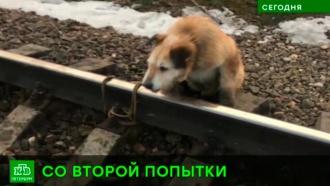 Прокуратура заставила наказать хозяина, привязавшего собаку к рельсам