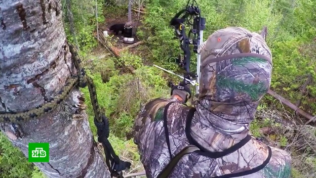 Ценители старинной охоты приветствуют легализацию лука истрел.браконьерство, законодательство, оружие, охота и рыбалка.НТВ.Ru: новости, видео, программы телеканала НТВ