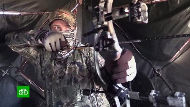 Легализация охоты с луком: депутаты успокоили спортсменов и зоозащитников.браконьерство, законодательство, оружие, охота и рыбалка.НТВ.Ru: новости, видео, программы телеканала НТВ