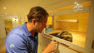 Ведущий НТВ побывал в первом в мире пятизвездочном отеле для кошек
