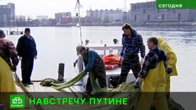 Питерским рыбакам установили лимит на вылов корюшки.Ленинградская область, Санкт-Петербург, охота и рыбалка.НТВ.Ru: новости, видео, программы телеканала НТВ