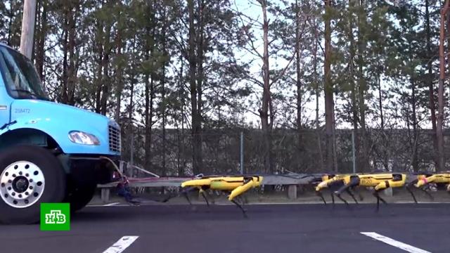Роботы Boston Dynamics научились буксировать многотонный грузовик.США, роботы, технологии.НТВ.Ru: новости, видео, программы телеканала НТВ