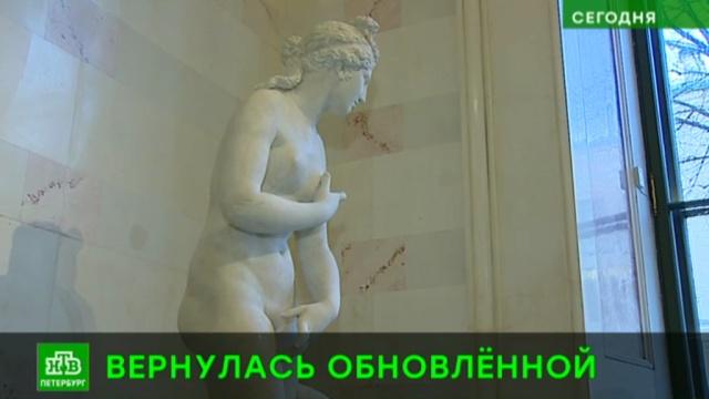 Эрмитаж отреставрировал античную статую Венеры.Санкт-Петербург, Эрмитаж, выставки и музеи, реконструкция и реставрация, скульптура.НТВ.Ru: новости, видео, программы телеканала НТВ