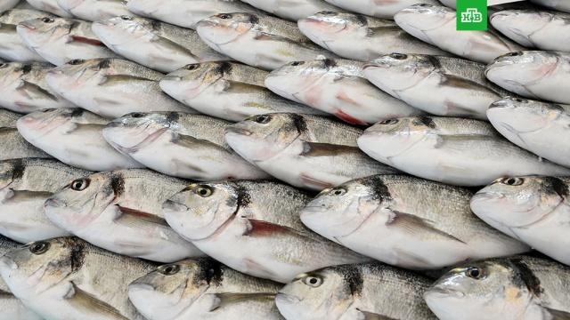 Живущие в рыбе паразиты атакуют россиян.Порядка 20 тысяч россиян заразилась паразитами из-за употребления необеззараженной рыбы в прошлом году. Роспотребнадзор призывает готовить рыбу правильно.Роспотребнадзор, болезни, рыба и рыбоводство.НТВ.Ru: новости, видео, программы телеканала НТВ