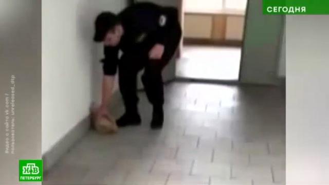 Охранник вуза ударил беременную кошку о кафельный пол.Санкт-Петербург, вузы, жестокость, животные, кошки.НТВ.Ru: новости, видео, программы телеканала НТВ