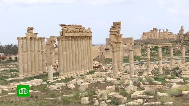 Пальмира вернулась к нормальной жизни.Сирия, войны и вооруженные конфликты.НТВ.Ru: новости, видео, программы телеканала НТВ