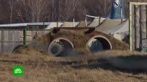 Жители башкирского поселка недовольны соседством с полигоном Росгвардии