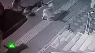 Бесстрашный кот отбился от стаи бродячих собак