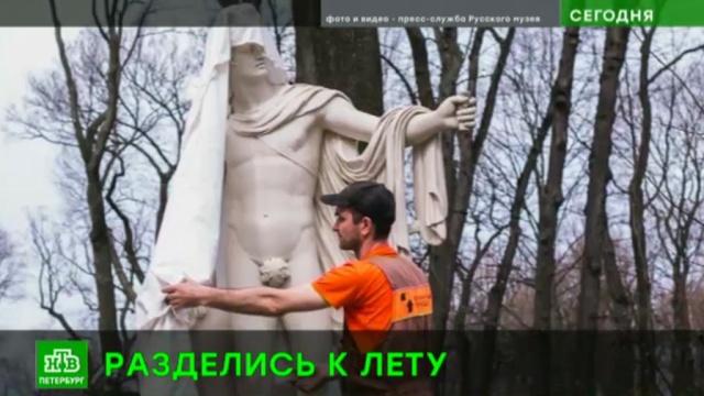 Знаменитые статуи Летнего сада освободили от зимних оков.Летний сад, Русский музей, Санкт-Петербург, скульптура.НТВ.Ru: новости, видео, программы телеканала НТВ