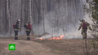 Несколько регионов России охвачены природными пожарами