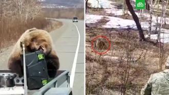 На Камчатке медведь обокрал охотников