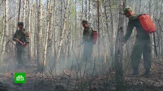 Природные пожары охватили в России почти 50 тысяч гектаров