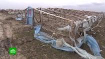 ВВолгоградской области устроили облаву на китайские теплицы