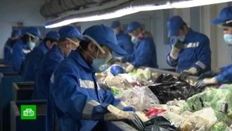 Оплата по факту: в России изменится подход к тарифам на вывоз мусора