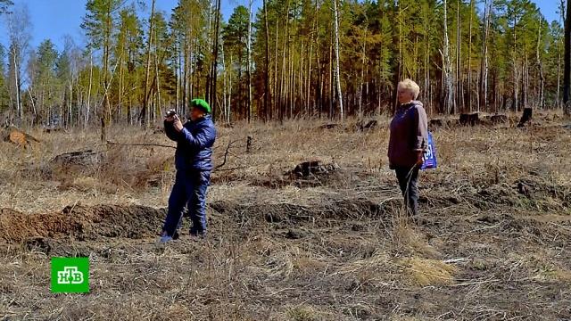 Иркутские пенсионерки борются за экологию иловят черных лесорубов.Иркутская область, экология.НТВ.Ru: новости, видео, программы телеканала НТВ