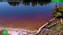 Варварская застройка уничтожает берега озера Лассылампи в Ленобласти