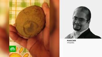 Яйца птеродактиля за 78 млн рублей: что стоит за нашумевшим объявлением
