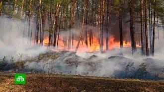 ВИркутской области полыхает более 2,5тыс. гектаров леса