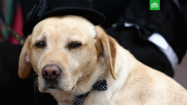 В Каннах наградили пса, снявшегося у Тарантино.Критики наградили собаку Брэнди из фильма Квентина Тарантино «Однажды… в Голливуде» призом The Palm Dog Award.Канны, кино, награды и премии, собаки, фестивали и конкурсы.НТВ.Ru: новости, видео, программы телеканала НТВ